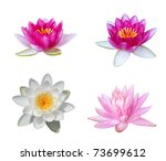 Collection of water lily isolated on white - stock photo