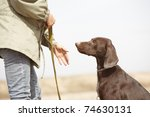 German short-haired pointer Kurzhaar and trainer outdoors. Natural light and colors - stock photo