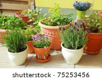 Small herb and flower garden built on terrace or roof - stock photo