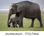 Wild Asian elephant mother and baby, Corbett National Park, India - stock photo