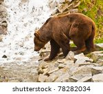 Brown bear at waterfall - stock photo