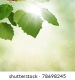 Green leaves border with sun on textured background - stock photo
