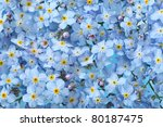 Background of many blue flowers - stock photo
