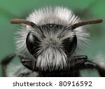 White Furred Miner Bee - stock photo