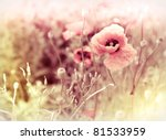 morning flowers meadow - vintage photo background - stock photo