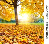 Colorful autumn - stock photo