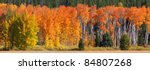 autumn trees panoramic view  in Yellowstone national park - stock photo