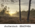 Misty morning over a marsh, pine trees in the foreground, middle of Sweden - stock photo