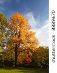 Bright autumn tree in a park over deep blue sky - stock photo