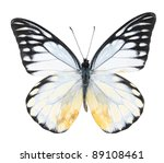 White and black butterfly on  isolated  white background - stock photo