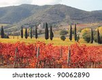 fantastic landscape of tuscan vineyards in autumn, at horizon St. Antimo Abbey ,region of famous red italian wine Brunello di Montalcino,  Italy, Europe - stock photo