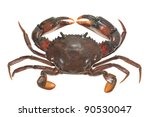Live Crab Top View Isolated On White Background - stock photo