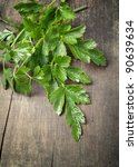green parsley on old plank - stock photo