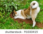 Purebred dog in a garden. - stock photo