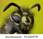 Highly detailed close up profile of a common wasp - stock photo