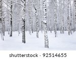 View of beautiful winter birch wood - stock photo
