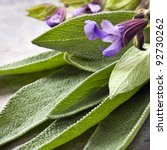 Flowering sage, fresh-picked.  Square crop. - stock photo