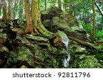 Rocky outcrop with bare roots showing on a large hardwoods tree in a northern united states forest - stock photo