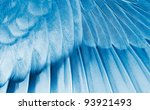 The wing of the bird closeup. X-ray effect. - stock photo