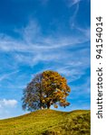 Lonely tree on a hill with blue sky in the background - stock photo