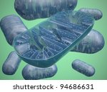 Mitochondria - microbiology illustration - stock photo