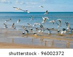 Group of seagulls - stock photo