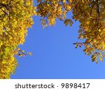 Colorful autumn leaves on sky background - stock photo