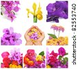 a collage with nine pictures of different flowers - stock photo