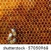 bees on honeycomb - stock photo
