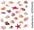 Big collage of different shells on a white background - stock photo