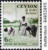 CEYLON - CIRCA 1950: A stamp printed in Ceylon, Sri Lanka,  shows Three women in the rice field, circa 1950 - stock photo
