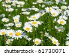 Close-up of sunny chamomile-daisy field - stock photo
