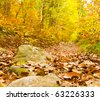 colorful autumn in woodland - stock photo