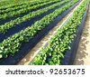 farm field - stock photo