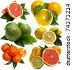 Fruits Citrus - stock photo