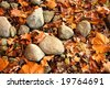 leaves lay among the rocks along the White River in Indianapolis showing the progress of Autumn - stock photo