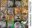 Mosaic of big cats photos - stock photo