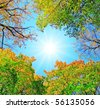 Trees of a park - stock photo