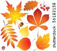 autumn leaves set - stock vector