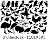 collection of bird silhouette - vector bird - stock vector
