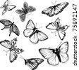 Set of black and white vector butterflies - stock vector