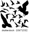 Some silhouettes of seagulls flying - stock vector