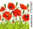 Vector seamless horizontal border with red poppy. Red flower and green grass - stock vector