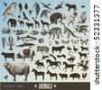 vector set: animals - collection of 60 detailed animal illustrations and animal silhouettes - stock vector