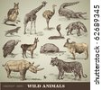 vector set: wild animals - variety of retro animal illustrations - stock vector
